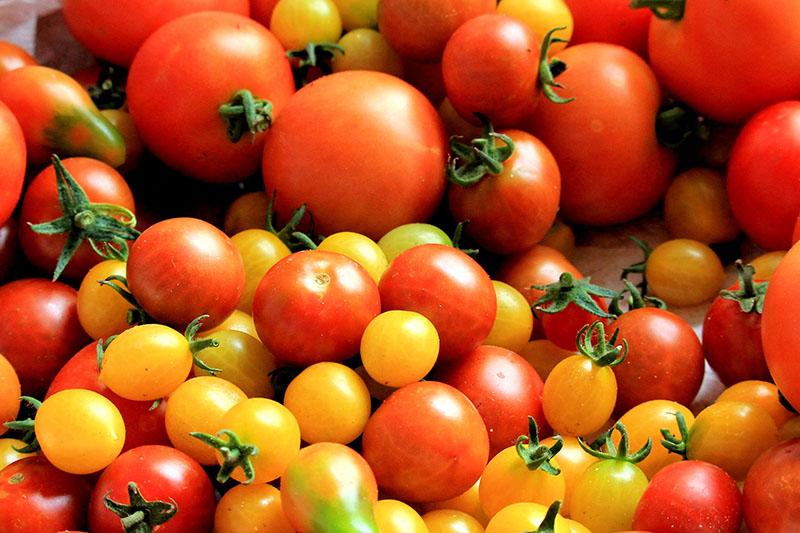 トマトは美乳の味方!!トマトのバストアップ効果とは?